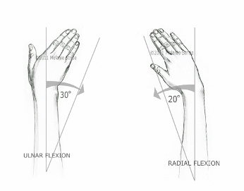 ulnar and radial deviation