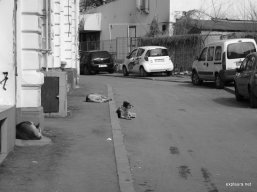 Stray dogs were everywhere.