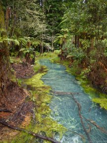 Craziest colours ever? What happens when you grow redwoods by volcanic waters.