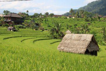 voyage-indonesie-bali-sidemen1
