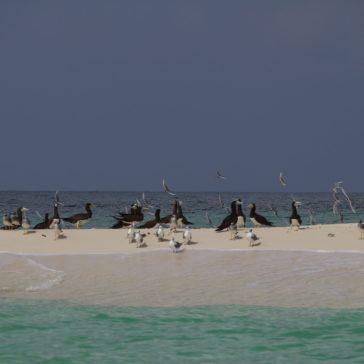 voyage-erythree-archipel-des-dahlak-ile-madote-alain-bavoil-02