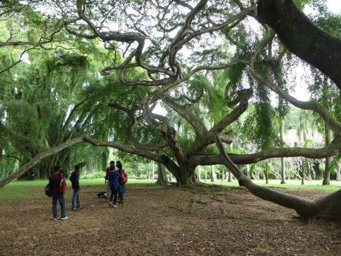 voyage-sri-lanka-kandy-jardin-botanique-10