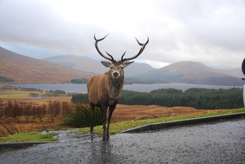 segundo viaje a Escocia