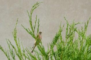 biodiversité oiseau