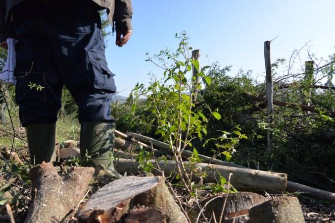 pousse des arbres et des arbustes dans la haie pilote
