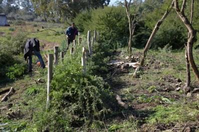 Activités de Hedge Laying