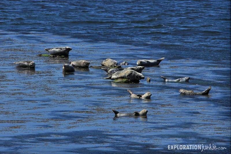 Inishmore seals