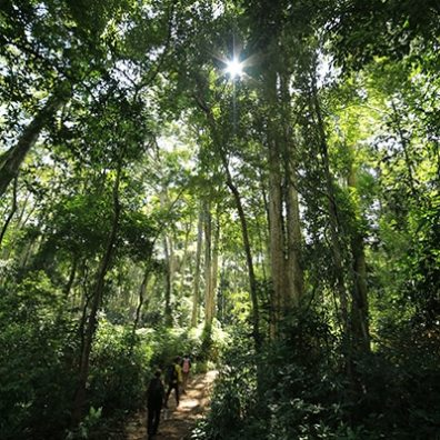 Hin Namno forest
