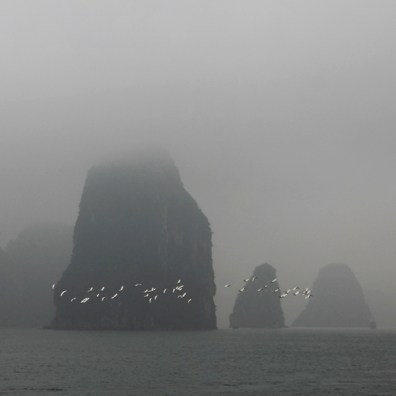 Cloudy and rainy weather on Halong Bay, Vietnam. The low clouds create a mysterious and dark atmosphere, enhancing the contrast with the group of flying white birds.