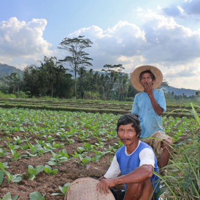 Portrait of tobacco farmers near Borobudur, Java, Indonesia.