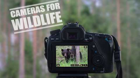 Best Camera for Wildlife Photography - Reviews & Guide
