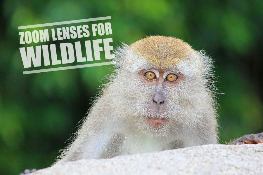 zoom lens for wildlife photography