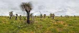 Wanagarren Nature Reserve