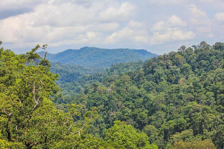 Ulu Temburong National Park