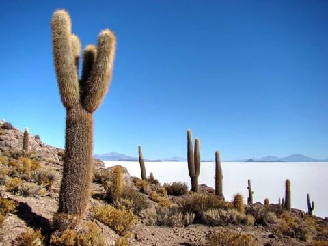 Salar de Uyuni Isla Incahuasi