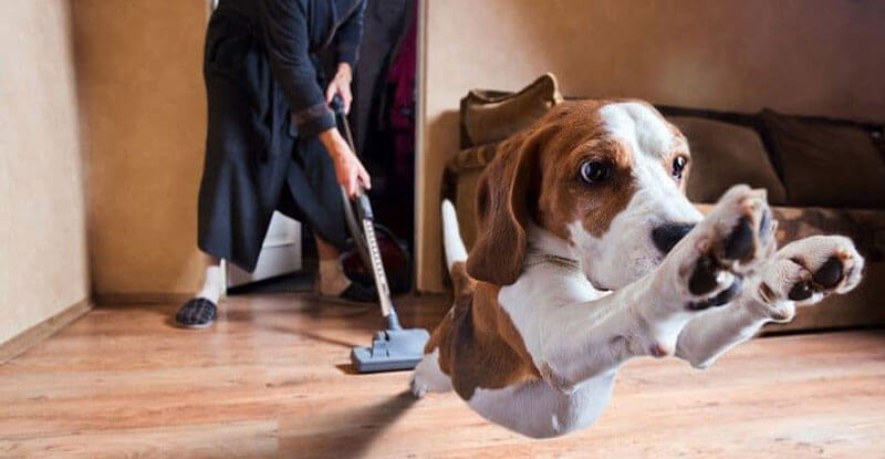 Vacuum Cleaner Showdown