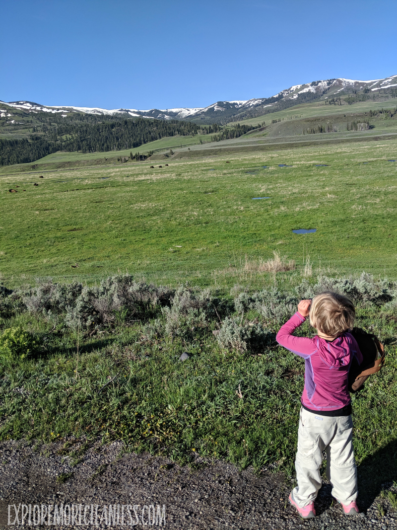 lamar valley with kids yellowstone