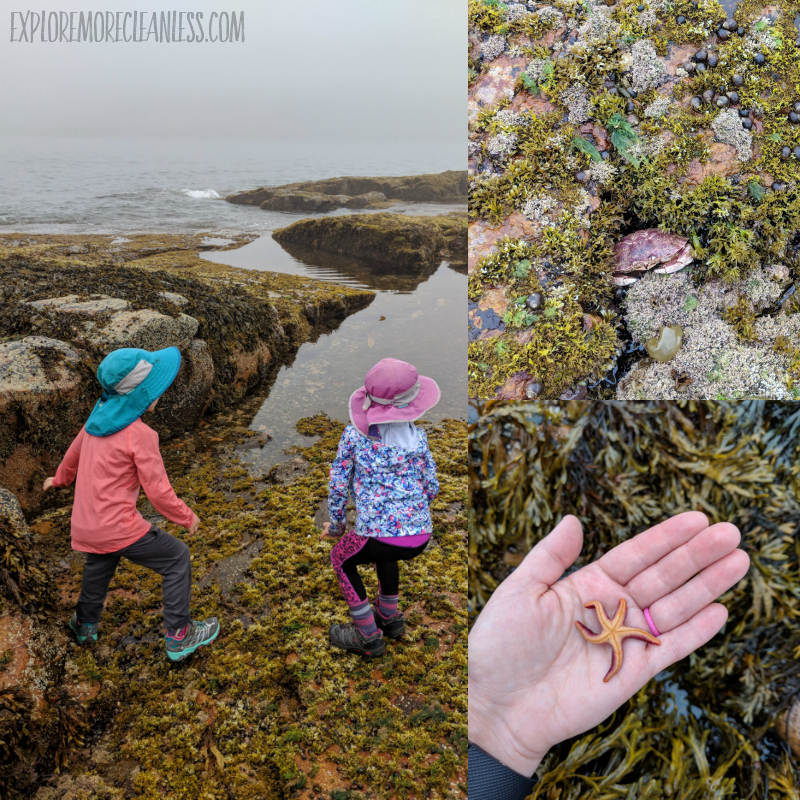 wonderland trail tidepool acadia kids