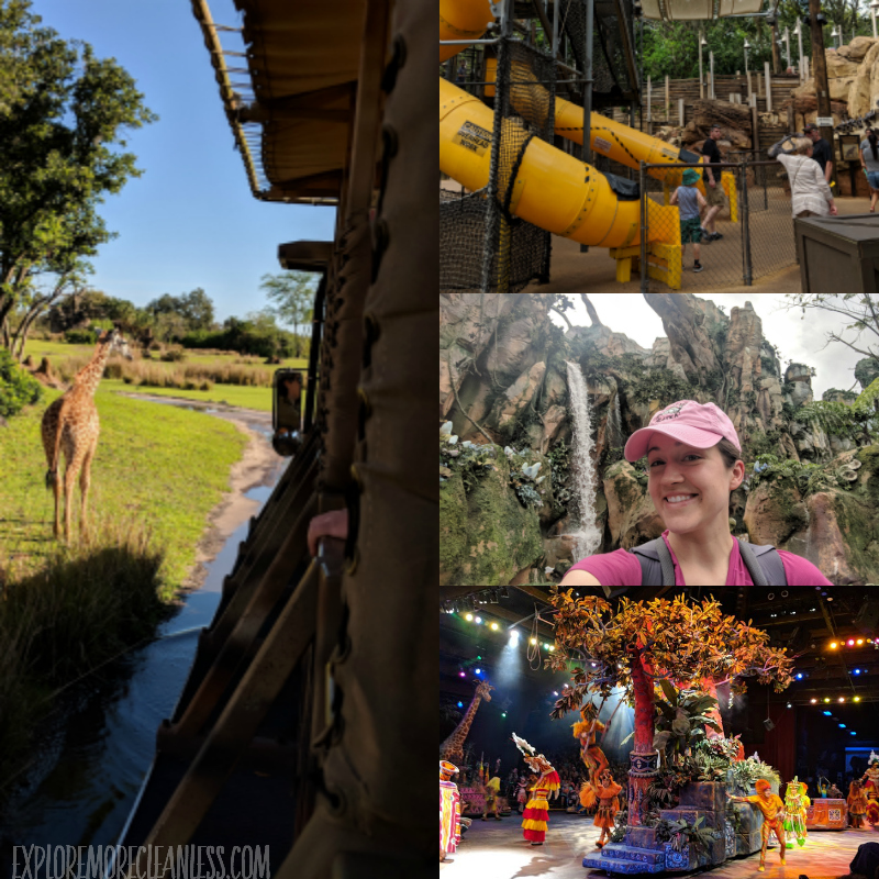 animal kingdom collage wdw