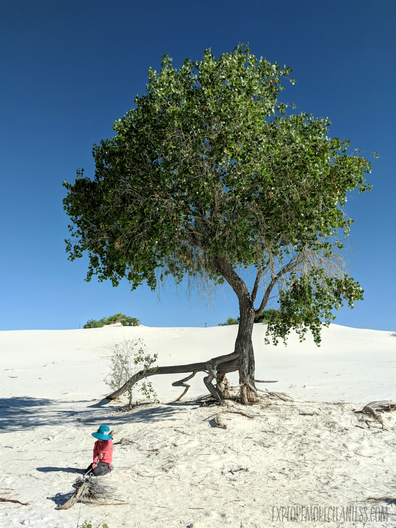 tree white sands national monument