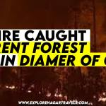 Diamer forest is under fire - Wildfire caught the diamer forest