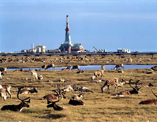 Image result for image of northslope oil