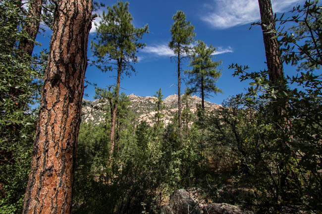Granite Basin Camping Prescott Arizona