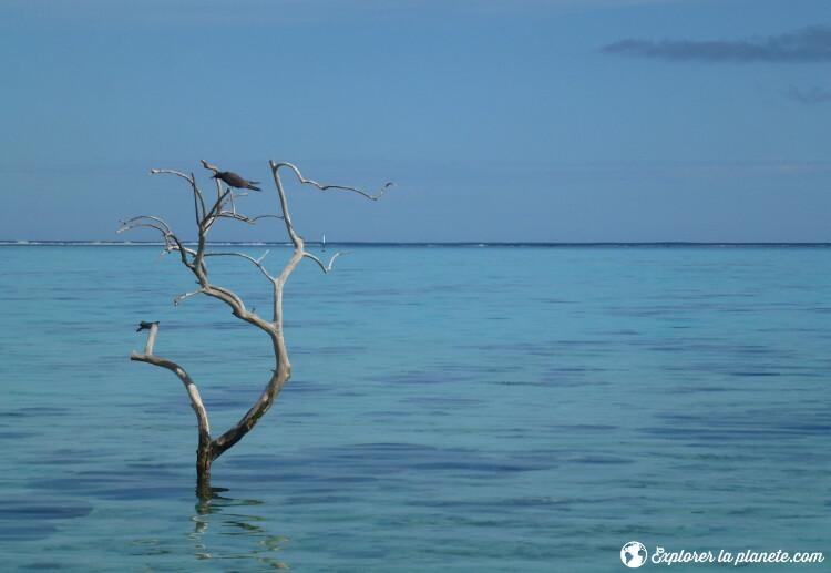 iles-visiter-polynesie-francaise-arbre-et-oiseau-a-moorea