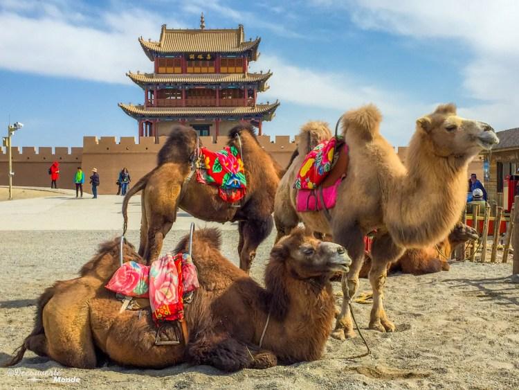 Chameaux devant temple au Gansu en Chine destinations en dehors des sentiers battus