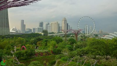 View of Singapore Skytree Forest and the Ferris wheel the Singapore Flyer from the walkway at the Gardens by The Bay in Singapore ExplorerLink