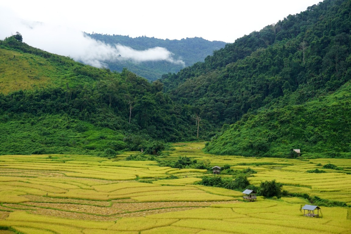Rice paddies in a valley near Ban Nalan Village. Nam Ha National Protected Area,Luang Namtha