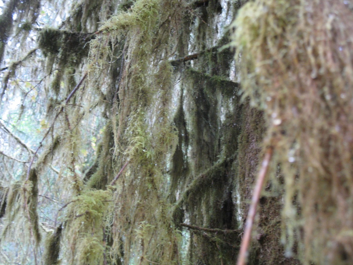 hall-of-mosses-hoh