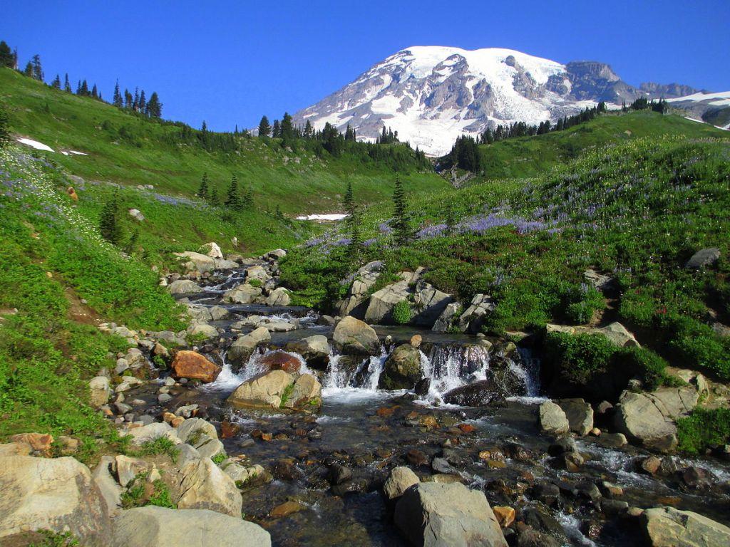 Mount Rainier meadow