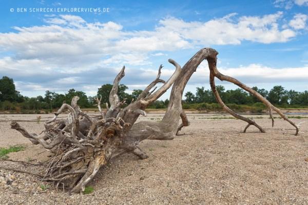 Fluss Allier Baum auf Sandbank