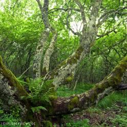 Baum zwischen den Puys