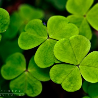 Clover-Background-4797