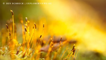 Moos Blühten im Sonnenlicht