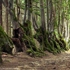 Auvergne Hexenweg Allee der Giganten