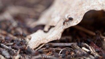 Ameisen Haufen