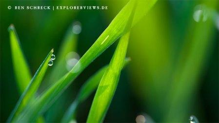Grünes Gras Ttautropfen