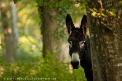 Esel im Wald