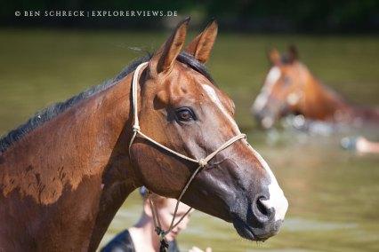 Pferde Bad