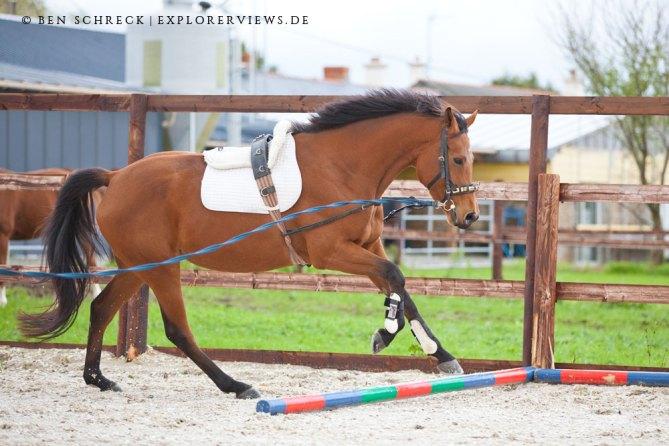 Pferdeausbildung Springen