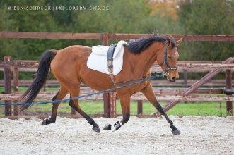 Pferdeausbildung