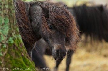 Pony Baum