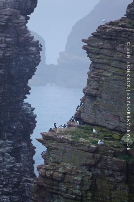 Vogelschutzgebiet Cap Frehel Fauconniere