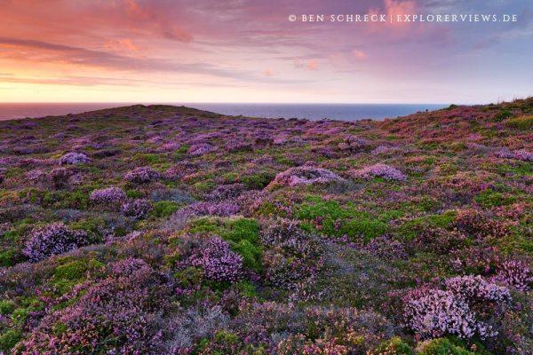 Frankreich Küste Heide 2988