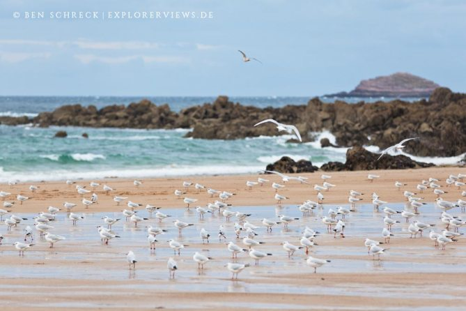 Möven am Strand Bretagne