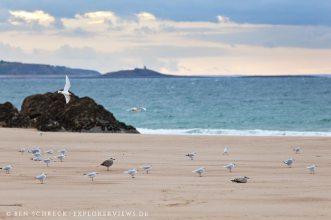 Möven Strand Bretagne