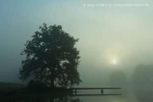 Tree in fog Wasser Fotos